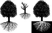 Isolated tree with roots
