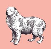 Dog Caucasian Mid-asian Shepherd
