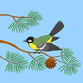 Titmouse on pine branch