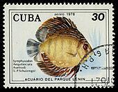 CUBA - CIRCA 1978: A stamp printed in Cuba shows fish Symphysodon Aequifasciata Axelrodi, circa 1978