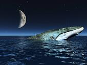 Whale on oceans surface with half moon