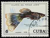 CUBA-CIRCA 1978: A stamp printed in Cuba shows fish Poecilia Reticulata, circa 1978