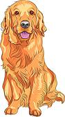 vector sketch red gun dog breed Golden Retriever