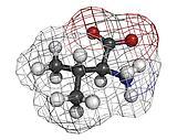Valine (Val, V) amino acid, molecular model.
