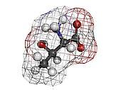 Threonine (Thr, T) amino acid, molecular model.