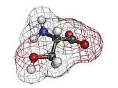 Serine (Ser, S) amino acid, molecular model.
