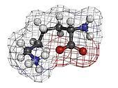 Lysine (Lys, K) amino acid, molecular model.