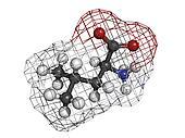 Leucine (Leu, L) amino acid, molecular model.