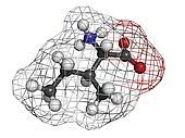 Isoleucine (Ile, I) amino acid, molecular model.