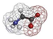 Glycine (Gly, G) amino acid, molecular model.