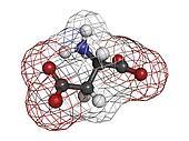 Aspartic acid (Asp, D, aspartate)amino acid, molecular model.