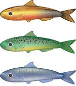 Colorful fish vector illustration