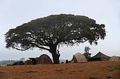 Camping under the Acacia Tree