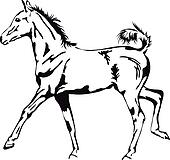 black and white vector outlines of a proud foal