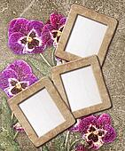 pansies and photo frame