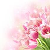 Flowers blooming tulips