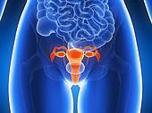 Highlighted uterus