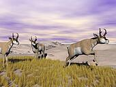 Pronghorn antelopes in the wild - 3D render