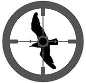 Shooting Bird