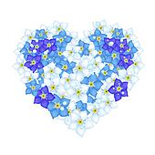 Heart Shape of Forget Me Not Flower