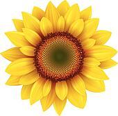 Clip Art Sunflower Clip Art sunflower clip art royalty free gograph sunflower