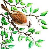 Shrike. Bird on the tree branch.