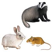 Badger, Rabbit, and Mouse