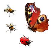 Butterfly, Ladybug, and Bees