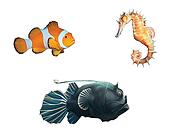 Monk fish, clown fish and sea horse.