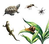 Coahuilan Box Turtle (Terrapene Coahuila), ant, spider, newt and snail on plants.