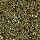 Mossy Wall Seamless Texture.