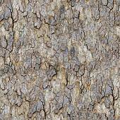 Maple Bark. Seamless Texture.