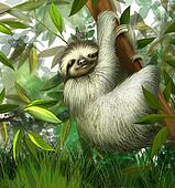 sloth, three toe male juvenile hanging in tree in tropical rainforest jungle, Illustration