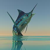 Marlin Sport Fish