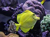 beautiful and bright tropical fish swimming in an aquarium