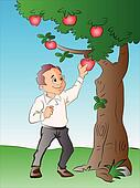 Man Picking Apples from a Tree, illustration