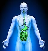 Medical Imaging - Organs - Guts