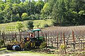 Worker cultivates soil in vineyard
