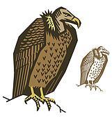 Vulture Bird Illustration Vector