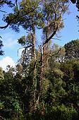Portuguese jungle