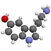 Serotonin neurotransmitter, molecular model.
