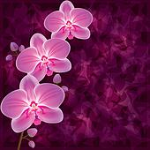 Background with flower orchid. Invitation or greeting card in gr