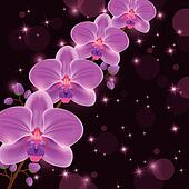 Bright greeting or invitation card with orchid