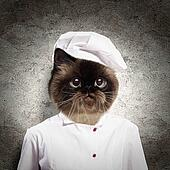 Funny fluffy cat cook in a robe