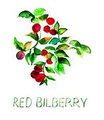 Red bilberry