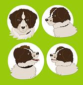 Four images of the dog