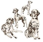 Two puppies and two adult Dalmatian