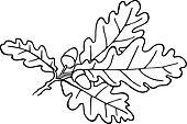 Acorn Plant
