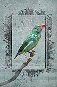 Australian Star Finch