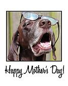German shorthaired pointer mother's day card